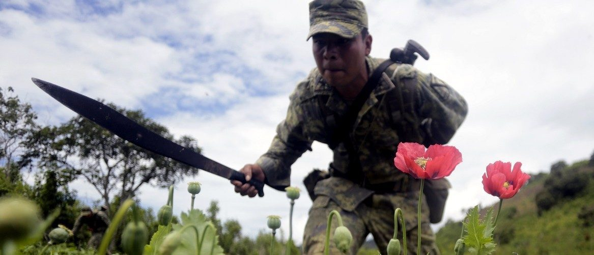 Mexican soldiers cut off poppy flowers during an operation at Petatlan hills in Guerrero state, Mexico