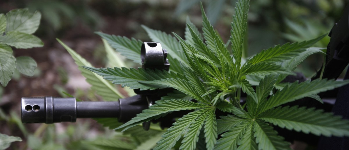 The rifle of a federal agent is seen through a marijuana leaf during the destruction of a marijuana plantation on the outskirts of the town of Casas Grandes, in the Mexican state of Chihuahua July 18, 2011.Federal agents located and destroyed 9 marijuana plantations totalling 7.4 acres in various areas of Casas Grandes sierra, local media reported. The federal forces incinerated some 9,600 kg (9.6 tonnes) of the drug and no detentions were reported.Picture taken July 18, 2011. REUTERS/Jose Luis Gonzalez
