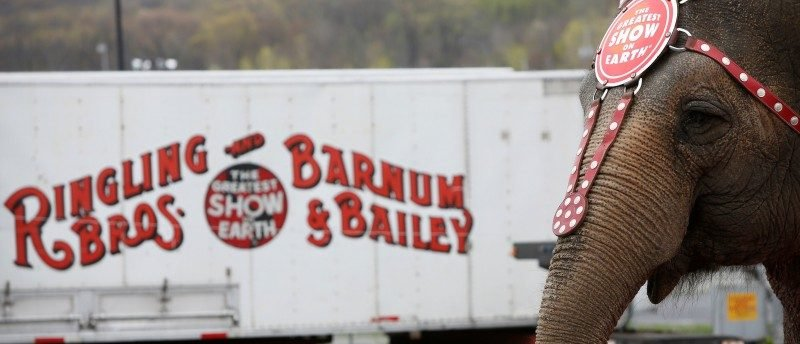 "An elephant participates in an elephant brunch before Ringling Bros and Barnum & Bailey Circus' ""Circus Extreme"" show at the Mohegan Sun Arena at Casey Plaza in Wilkes-Barre, Pennsylvania, U.S."