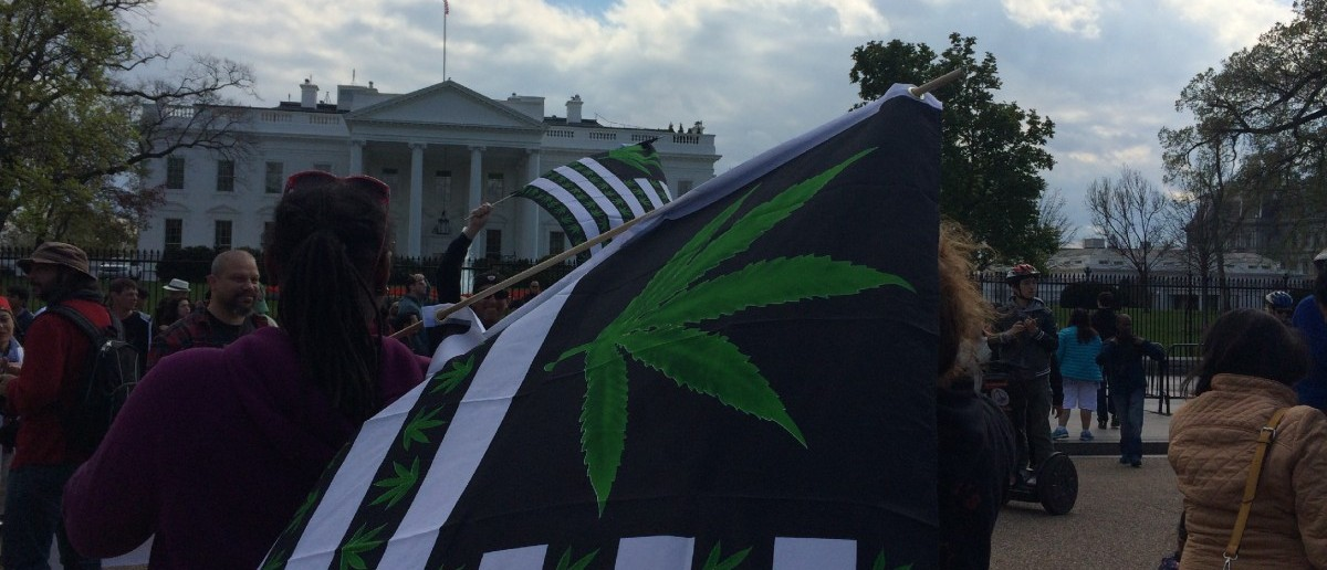 Weed Protest At White House (Connor D. Wolf)