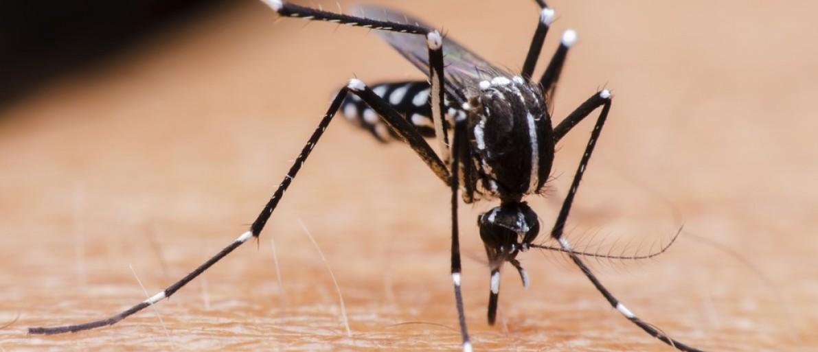 Mosquito. Media credit: chakkrachai nicharat/Shutterstock.