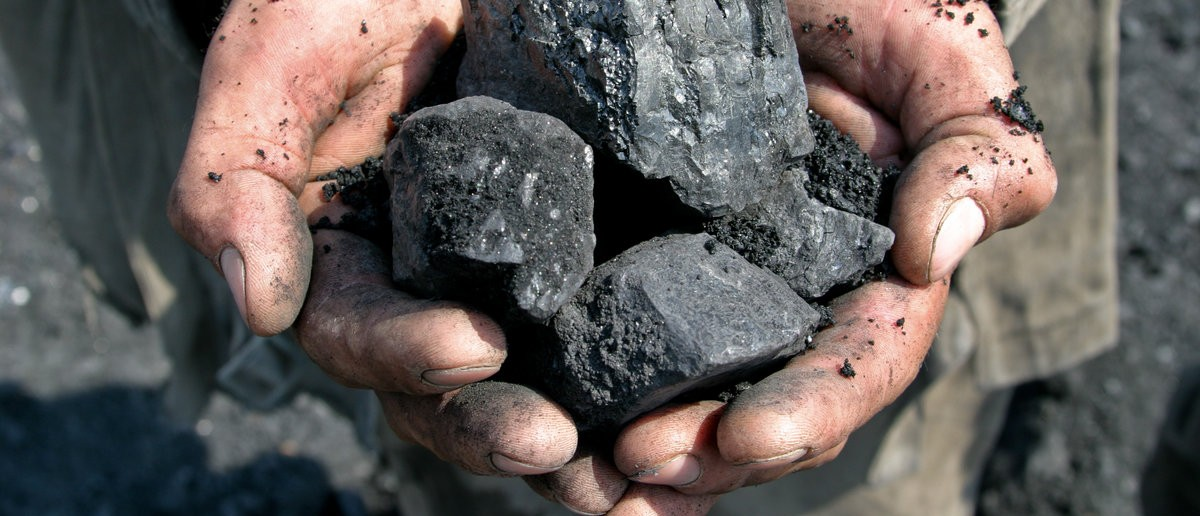Coal in the hands of a coal miner. Shutterstock.com / Vyacheslav Svetlichnyy