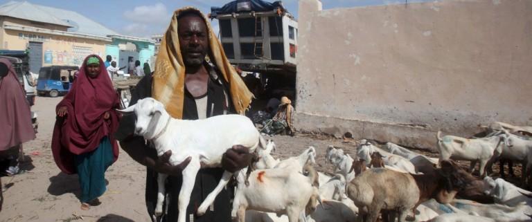 Trader carries his goat to a livestock market ahead of the Eid al-Adha festival in Somalia's capital Mogadishu