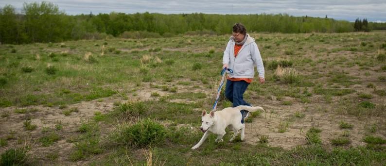 Turnbull walks a dog in the field behind the Bold Centre in Lac La Biche