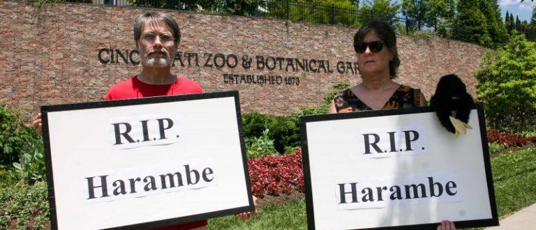 People attend a vigil for a gorilla outside the Cincinnati Zoo, in Cincinnati, Ohio