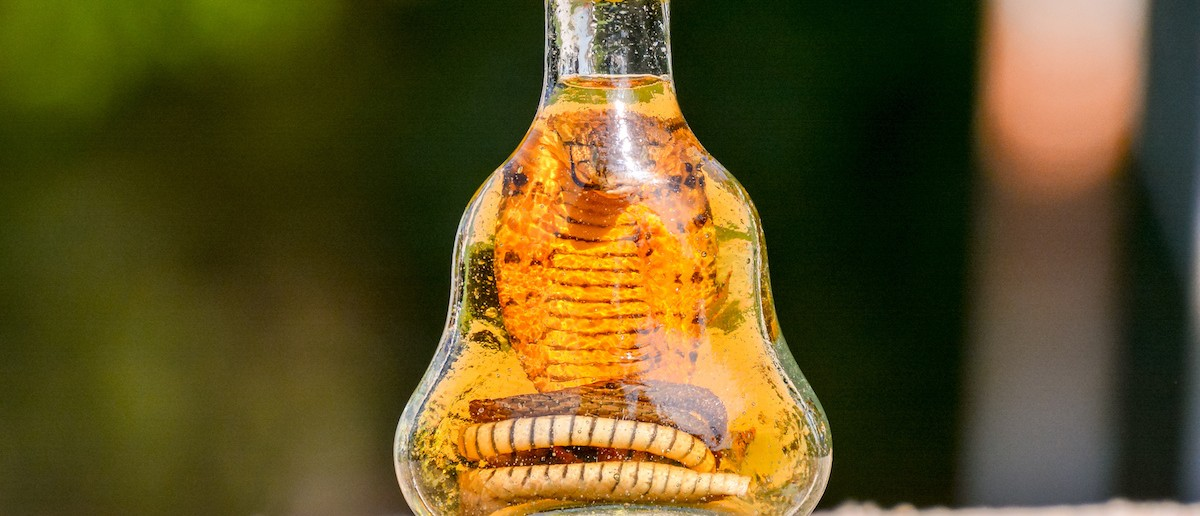 Bottle of Alcohol containing a Dangerous Cobra snake