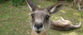 TRAGEDY, MATE! Australian Woman's Fake Boobs Ruptured In Bike Wreck With Kangaroo