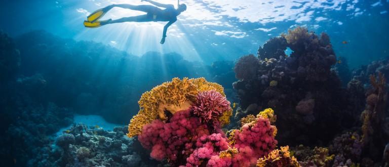 Free diver swimming underwater over vivid coral reef. Red Sea, Egypt Shutterstock.com / Dudarev Mikhail