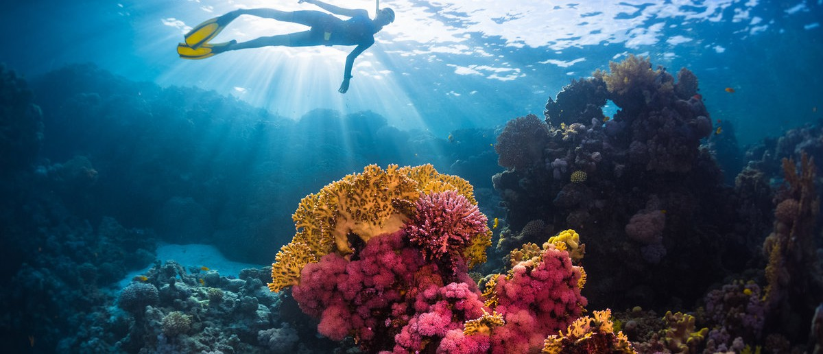 Free diver swimming underwater over vivid coral reef. Red Sea, Egypt Shutterstock.com / Dudarev Mikhail