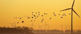 Geese flying at dawn in winter. Credit: J. Marijs/ Shuttershock