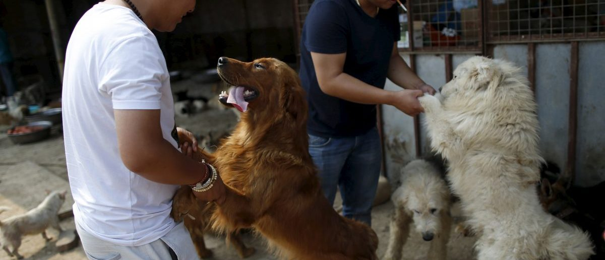 Visitors play with rescued dogs at a shelter ran by Yang Xiaoyun in Tianjin, China, July 8, 2015. Yang said she spent 300,000 RMB (48,248 USD) to purchase 500 dogs to rescue them from dog meat dealers at Yulin's annual dog meat festival last month. She keeps more than 1,000 dogs in her shelters, mostly abandoned or she purchased from dog meat traders. REUTERS/Kim Kyung-Hoon