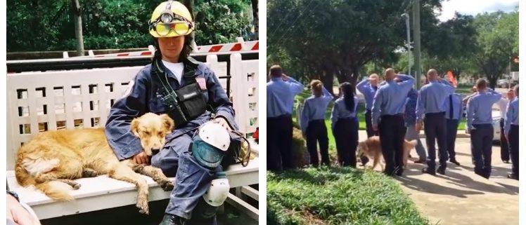 Last 9/11 Rescue Dog Dies At 16 (BarkBox YouTube/TexasOrange41 YouTube)