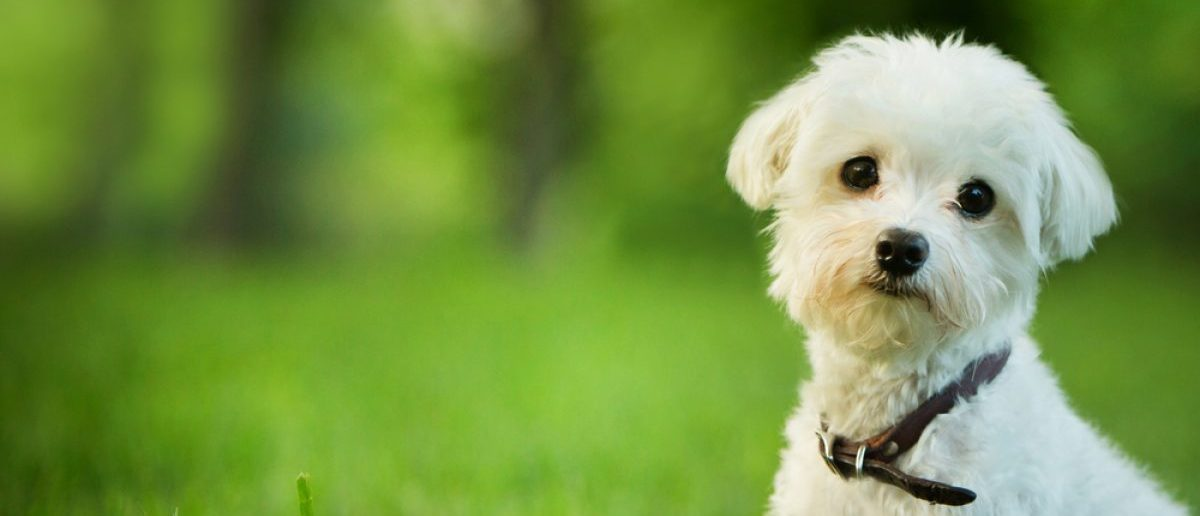 A dog stares into the distance. Source: Mary Rice/Shutterstock.com