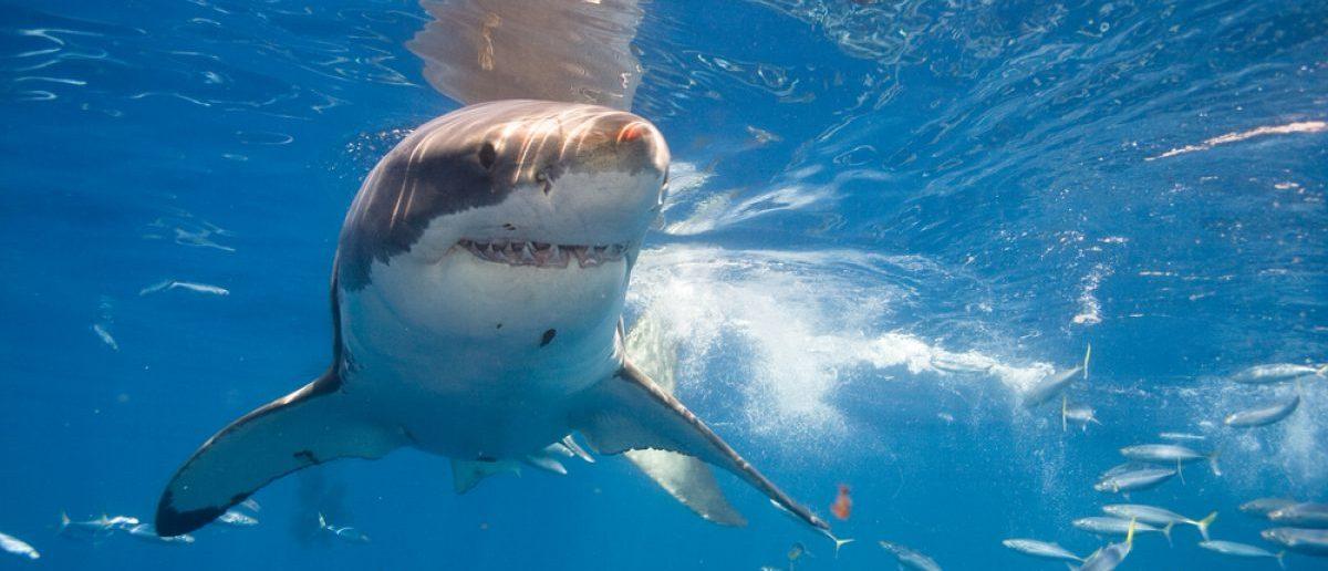 Shark (Credit: Shutterstock)
