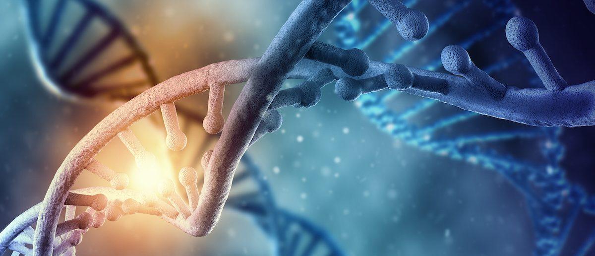 DNA strand /SHUTTERSTOCK