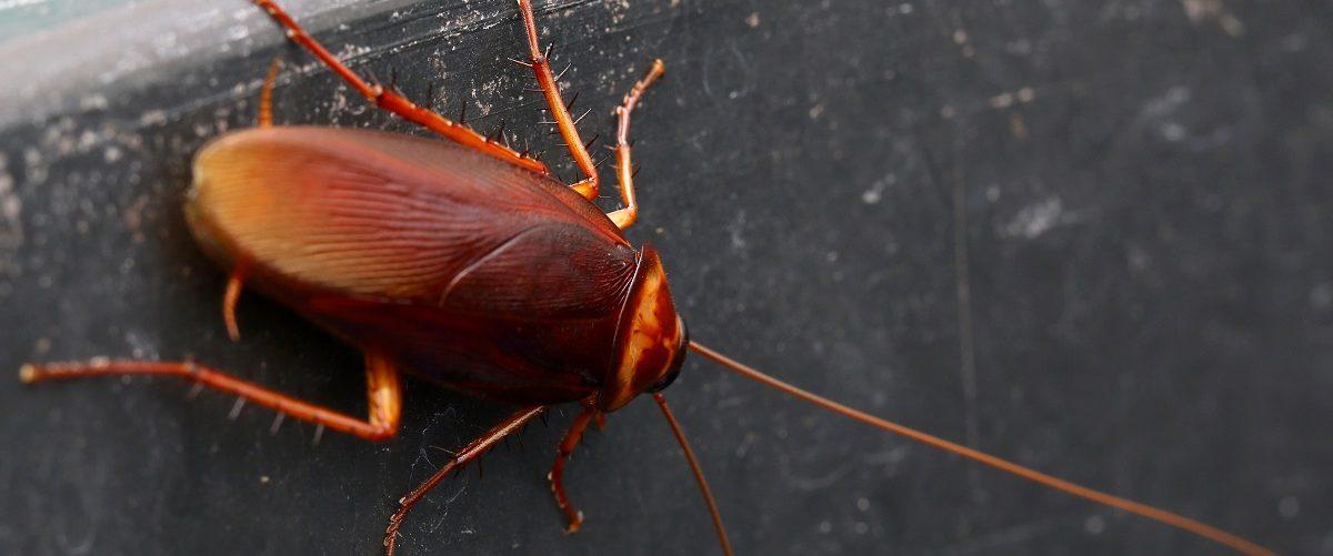 Cockroach sitting on a wall. Chaipanya/Shutterstock.