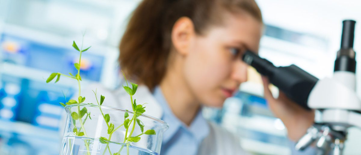 Research green plants in the laboratory. (Shutterstock/science photo)