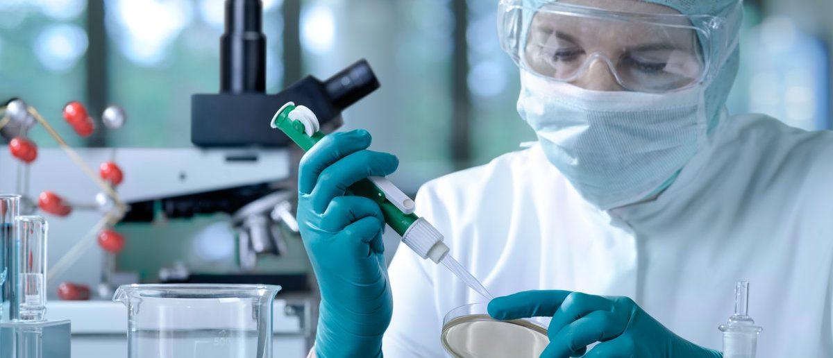 Scientist working in the laboratory (Shutterstock/Alexander Raths)