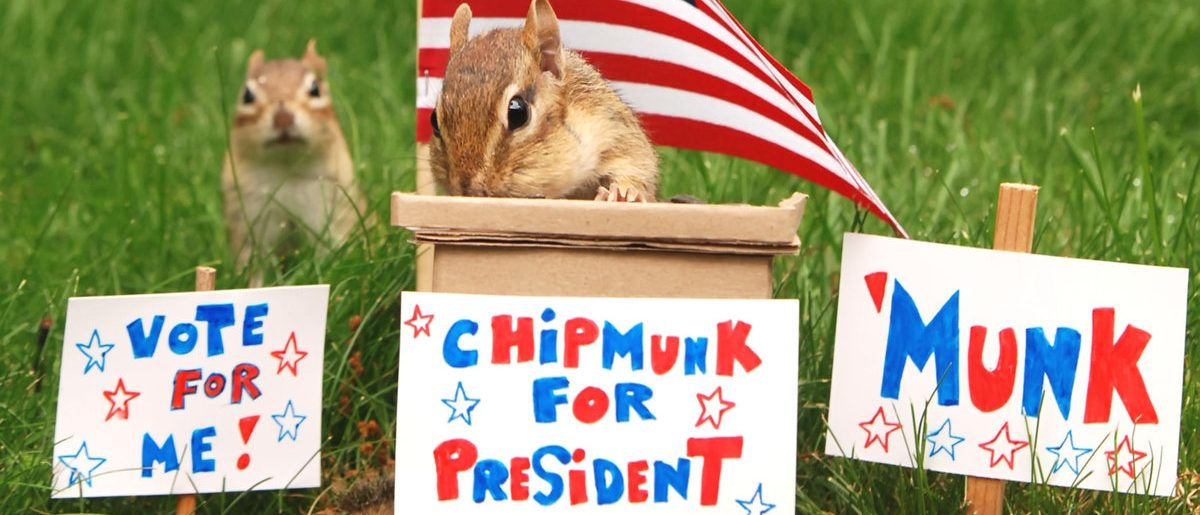 Chipmunk campaigning for president with his running mate in the background  (Shutterstock/Margaret M Stewart)