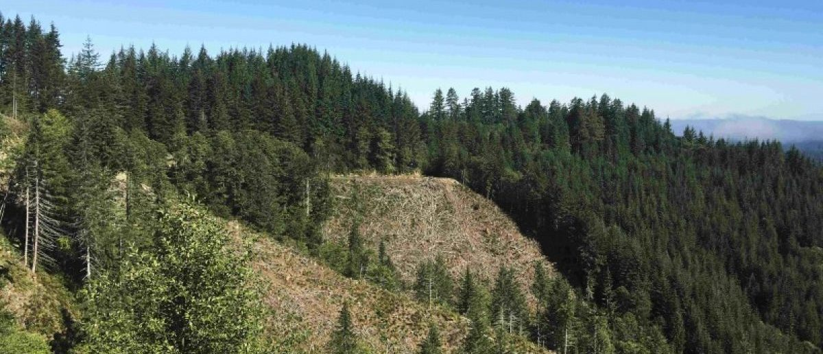 Timber clear cuts inside the Elliott State Forest in southwest Oregon