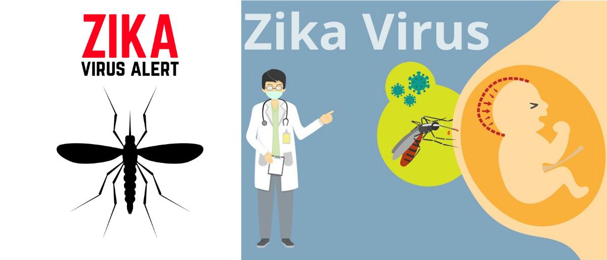 Zika collage Shutterstock/Ivan Kotiliar, Shutterstock/Fang-Chun Liu