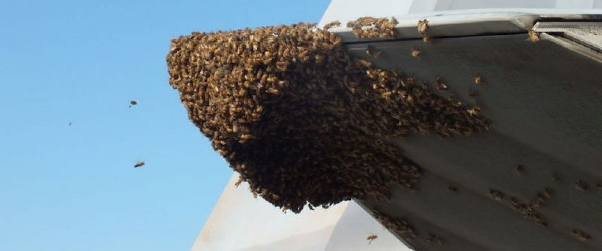 Bees swarmed on the F-22. (Photo:Carlos Claudio/US Air Force)