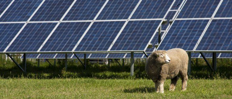 Solar panel with sheep (Shutterstock/Monika23)