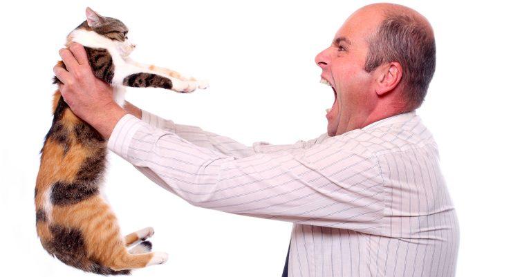Man screams at cat (Credit: Kletr/Shutterstock)