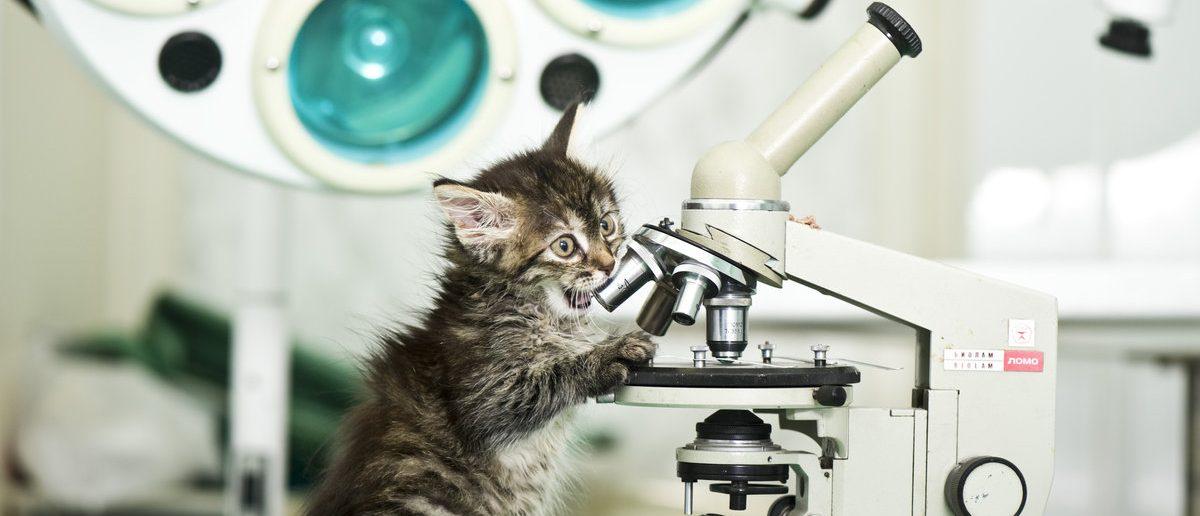 Little cat does science (Shutterstock/Kachalkina Veronika)