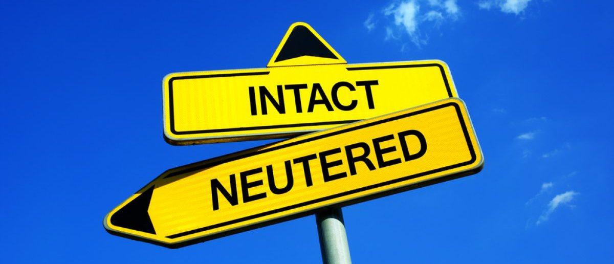 Neutered men (Credit: Shutterstock)