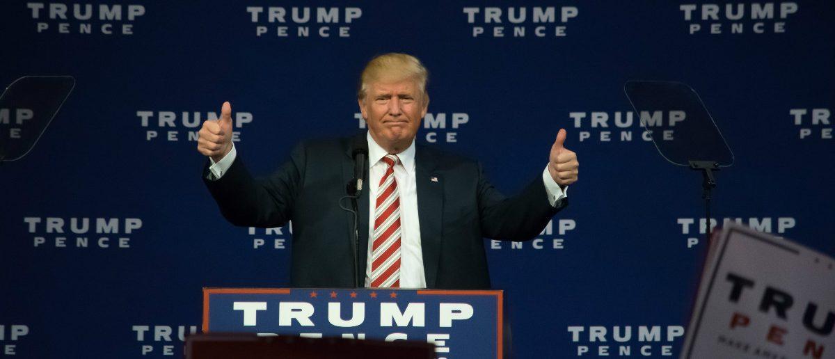 Donald Trump: Evan El-Amin/shutterstock.com