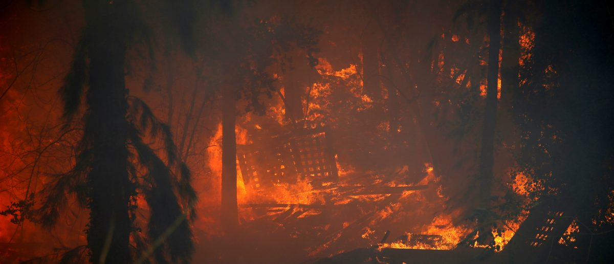 Flames blaze in the woods as a wildfire rages in the northern city of Haifa, Israel November 24, 2016. REUTERS/Baz Ratner