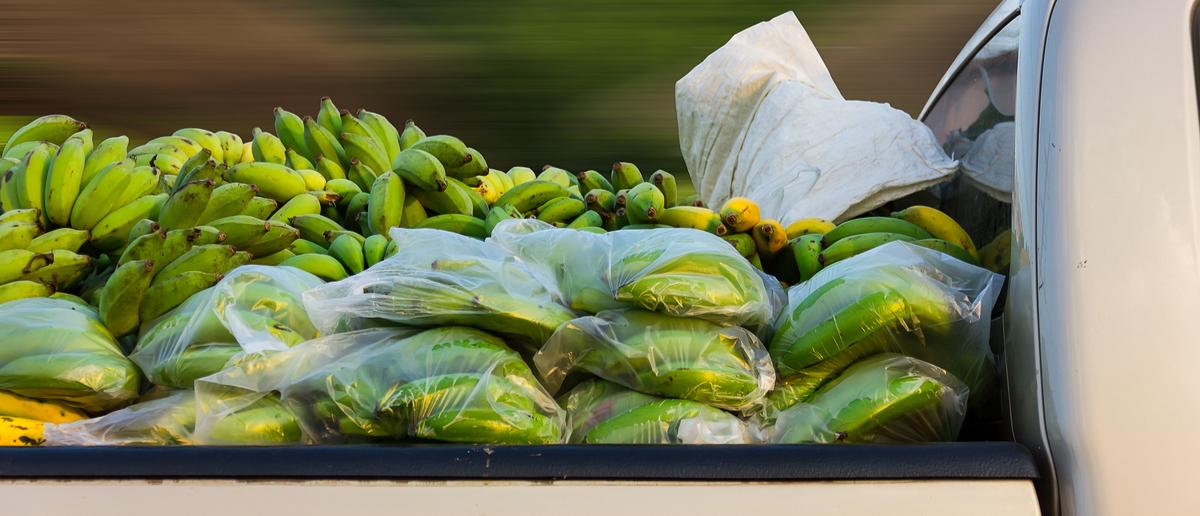 Truck carries bananas (Photo: GUNDAM_Ai/Shutterstock)