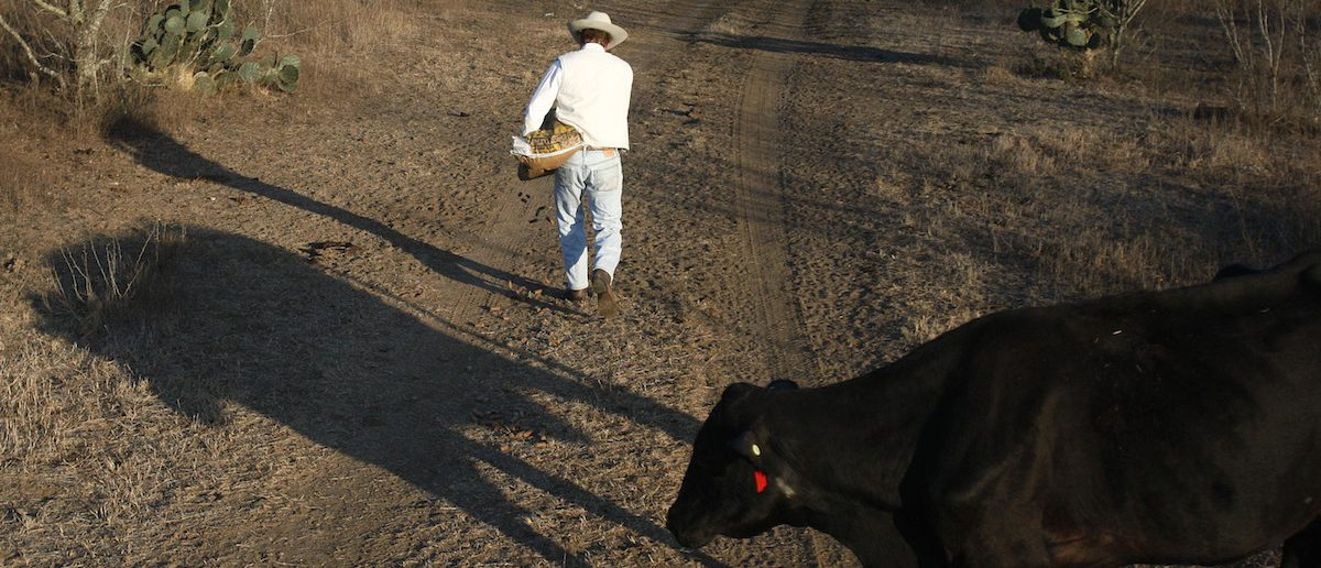 Frates Seeligson puts out feed for his cattle at his ranch in Pandora, Texas March 4, 2009. (REUTERS/Jessica Rinaldi)