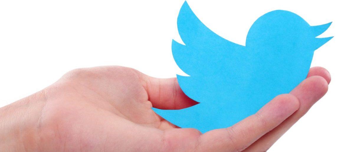 Hand holds Twitter's bird logo. [Shutterstock - fyv6561]