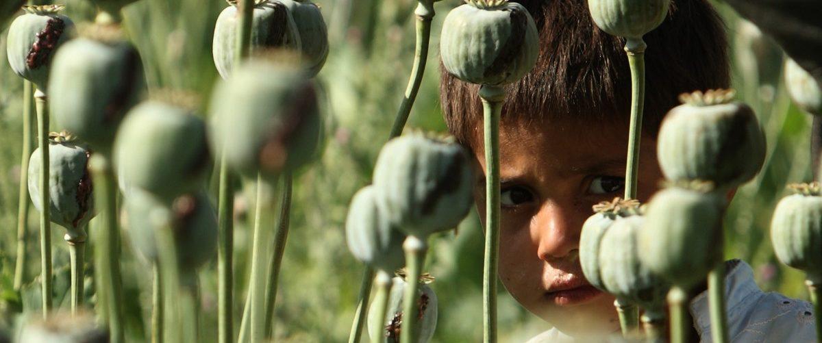 An Afghan boy looks from a poppy field as U.S Marines patrol village in Golestan district of Farah province