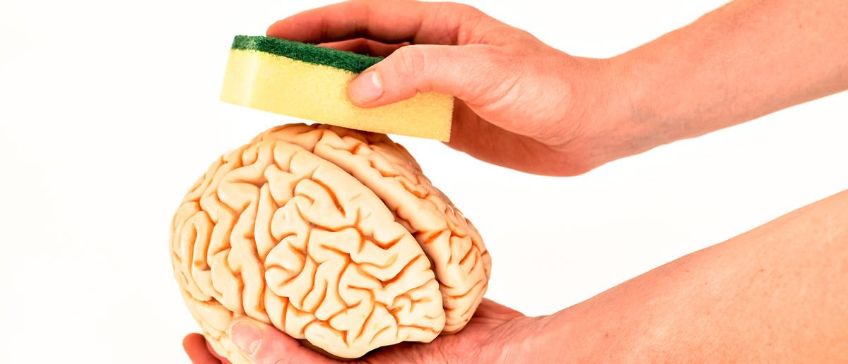 Brain model in hands by brainwashing with sponge (Shutterstock/ rozbeh)