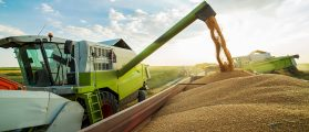 Half of the wheat dumped in this trailer will be exported out of the country (Photo: Shutterstock/oticki)