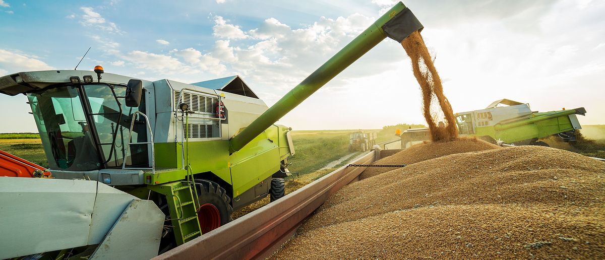 A combine tractor dumps wheat in a trailer, maybe to ship overseas (Photo: Shutterstock/oticki)