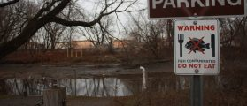 Military, municipal, and hospital pollution has contaminated the Heinz National Refuge at Tinicum near Philadelphia for nearly 50 years. An advisory against eating the fish has been in place since 1985. (Daily Caller News Foundation/Ethan Barton)