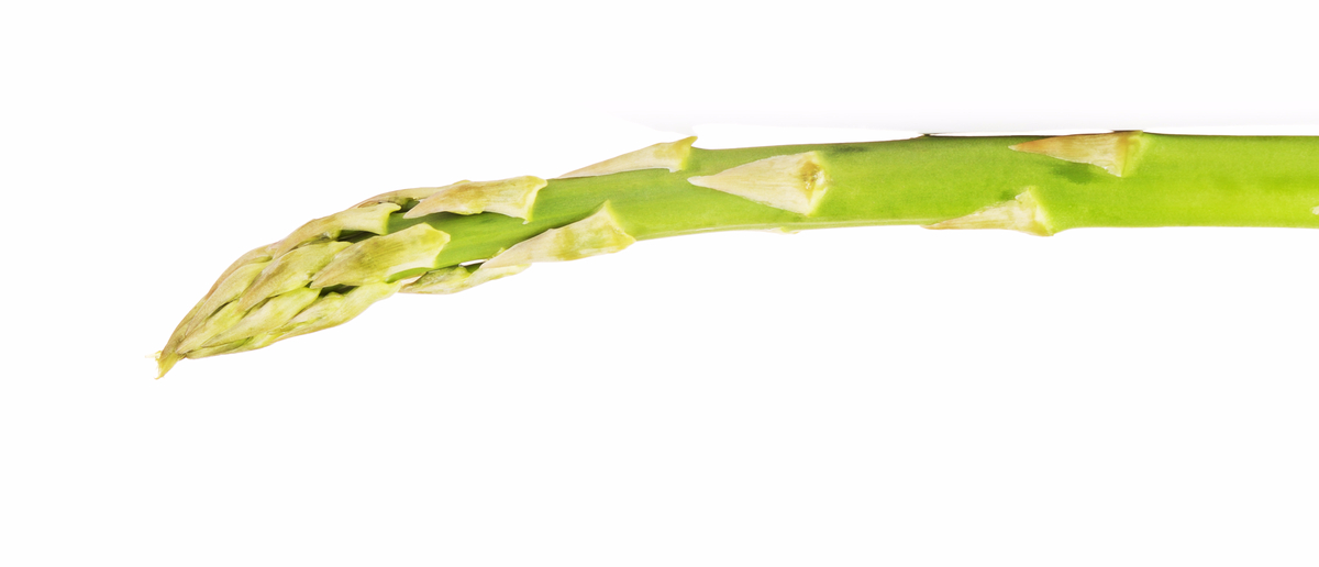 A single drooping asparagus stalk. (Photo: Shutterstock/Petr Malyshev)