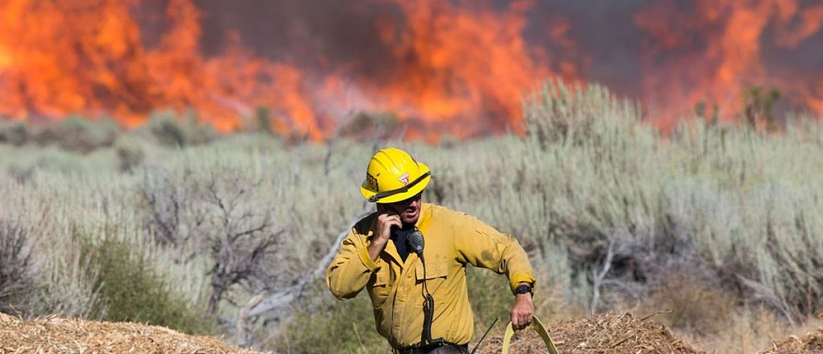 A firefighter maneuvers a hose at the Blue Cut wildfire in Wrightwood, California on August 17, 2016. A rapidly spreading fire raging east of Los Angeles forced the evacuation of more than 82,000 people as the governor of California declared a state of emergency. (Photo credit: JONATHAN ALCORN/AFP/Getty Images)