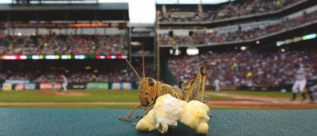 ARLINGTON, TX - JUNE 25:  A grasshopper eats a piece of popcorn during a game between the Detroit Tigers and the Texas Rangers at Rangers Ballpark in Arlington on June 25, 2012 in Arlington, Texas.  (Photo by Ronald Martinez/Getty Images)