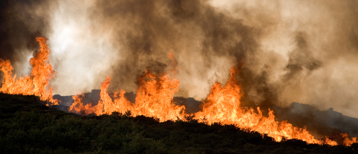 Wildfire burns through landscape (Photo: Shutterstock/EC Photos)