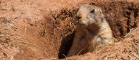 People Are Super Upset Don Jr. Is Going On Prairie Dog Hunting Spree