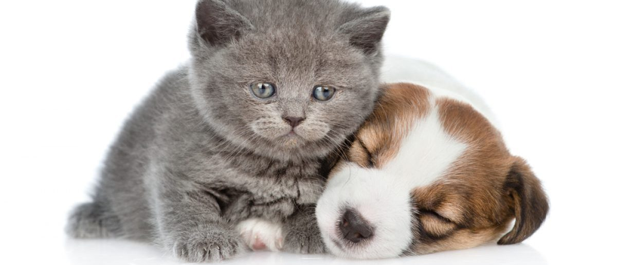 Cat and dog (Shutterstock/Ermolaev Alexander)
