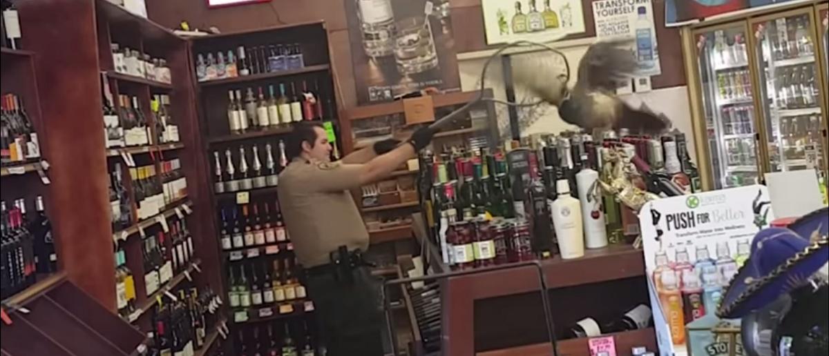 Spooked Bird Causes Liquor Store Smashup. (Associated Press/YouTube/Screenshot)
