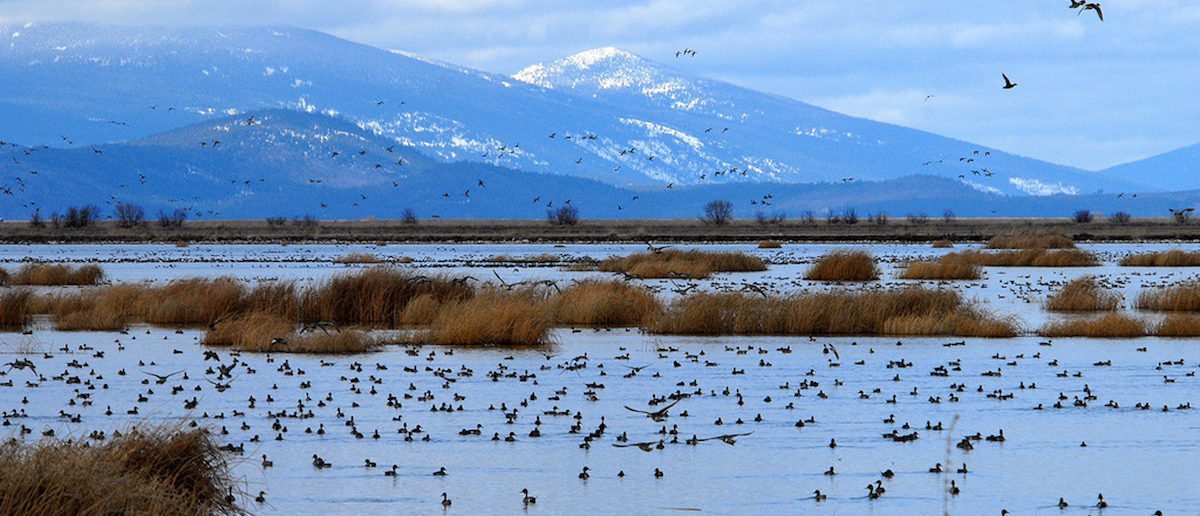 The Lower Klamath National Wildlife Refuge on the Oregon-California border is one of many examples of the west coast's breathtaking beauty (REUTERS/US Fish and Wildlife Service/Handout)