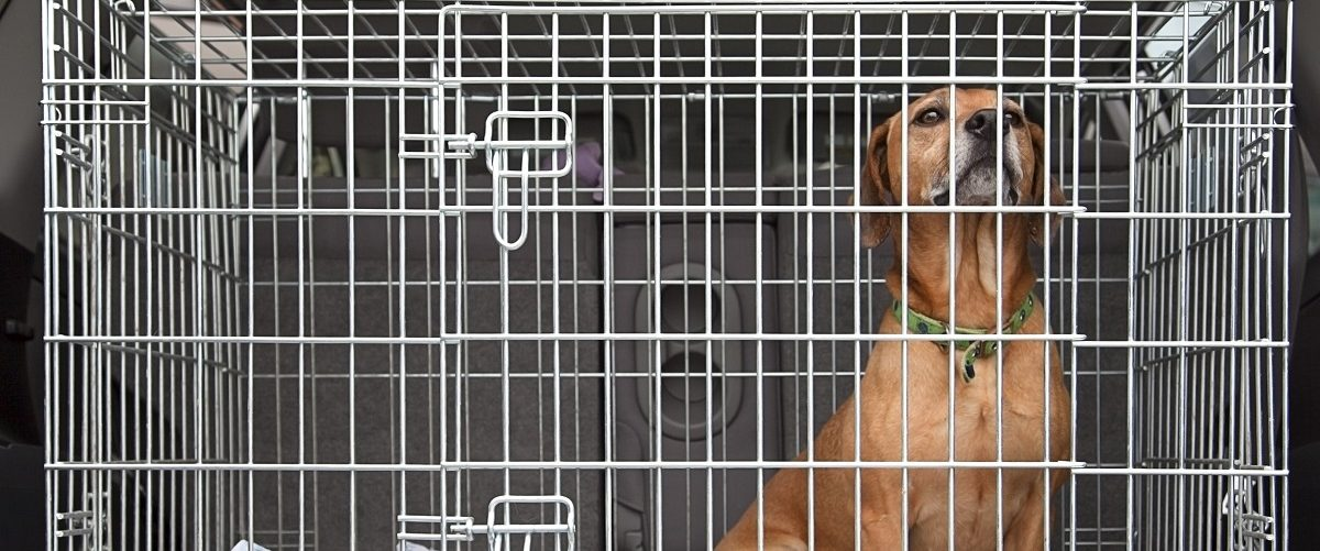 Dog locked in a cage. vincent noel/Shutterstock.