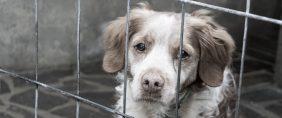 Dog in a cage. Davide Finocchi/Shutterstock.